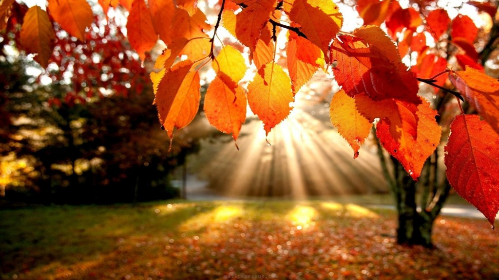 AutumnLeaves&Sunlight